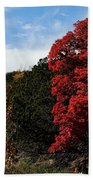 Blazing Maple Tree Beach Towel