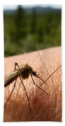Blood Thirsty Mosquito On Human Arm Beach Towel