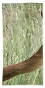 Bloodhound Tail Beach Towel