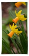 Blooming Daffodils Beach Towel