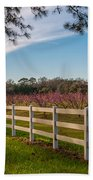 Blooming Peach Tree's At Boone Hall Beach Towel