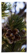Blooming Pinecone Beach Towel