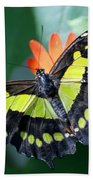 Blooms And Butterfly5c Beach Towel