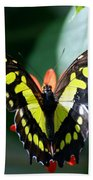 Blooms And Butterfly6c Beach Towel