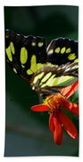 Blooms And Butterfly7c Beach Towel