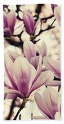 Blossoming Of Magnolia Flowers In Spring Time Beach Towel