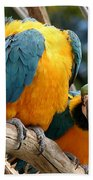 Blue And Gold Macaws Beach Towel