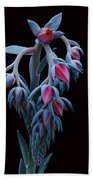 Blue And Pink Succulent Beach Towel
