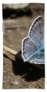 Blue Butterflies Beach Towel