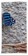 Blue Butterfly Myscelia Ethusa Art Prints Beach Towel