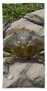Blue Crab On The Rock Beach Towel