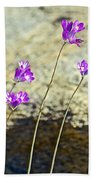 Blue Dicks Sway In A Breeze By Lower Palm Canyon Trail In Indian Canyons Near Palm Springs-california Beach Towel