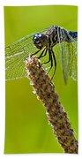 Blue Dragonfly 6 Beach Towel