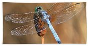 Blue Dragonfly Square Beach Towel