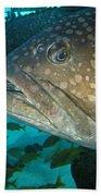 Blue-eyed Grouper Fish Beach Towel
