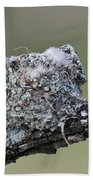 Blue-gray Gnatcatcher Nest Beach Towel