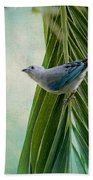 Blue Grey Tanager On A Palm Tree Beach Towel
