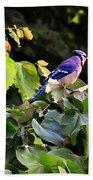 Blue Jay In A Tree Beach Sheet