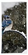 Blue Jay In Snow Storm Beach Towel