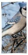 Blue Jay.. Beach Towel