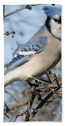 Blue Jay.. Beach Towel