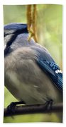 Blue Jay On A Misty Spring Day - Square Format Beach Towel