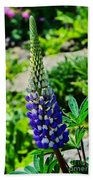 Blue Lupins Beach Towel