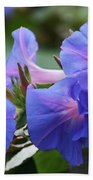 Blue Morning Glory Wildflowers - Convolvulaceae Beach Towel