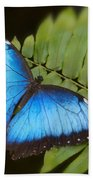 Blue Morpho Butterfly On Fren Dsc00441 Beach Towel
