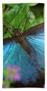 Blue Morpho Beach Towel
