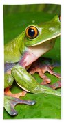 Blue-sided Tree Frog Beach Towel