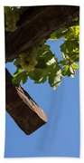 Blue Sky Grape Harvest - Thinking Of Fine Wine Beach Towel
