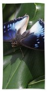 Blue-spotted Charaxes Butterfly #2 Beach Towel