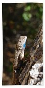 Blue Throated Lizard 4 Beach Towel