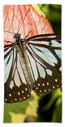 Blue Tiger Butterfly Beach Towel