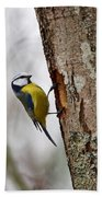 Blue Tit Searching Home Beach Towel