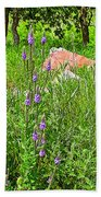 Blue Vervain And Rocks In Pipestone National Monument-minnesota  Beach Towel