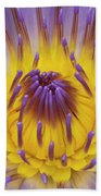 Blue Water Lily Beach Towel by Heiko Koehrer-Wagner