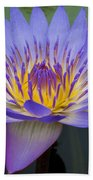 Blue Water Lily - Nymphaea Beach Towel by Heiko Koehrer-Wagner