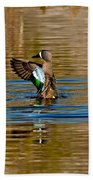 Blue-winged Teal Flapping Beach Towel