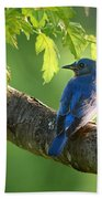 Bluebird In The Morning Beach Towel