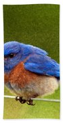 Bluebird  Painting Beach Towel by Jean Noren