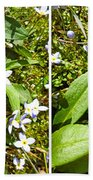 Bluets In Stereo Beach Towel
