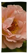 Blush Pink Rose With Dew Beach Towel