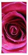Blushing Pink Rose 3 Beach Towel