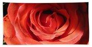 Blushing Orange Rose 3 Beach Towel