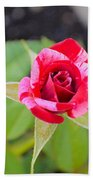 Blushing Rose Beach Towel