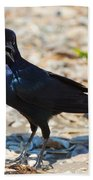 Boat-tailed Grackle Beach Towel