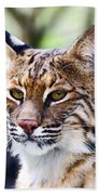 Bob Cat Pose Beach Towel