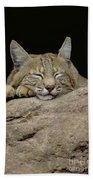 Bobcat, Arizona Beach Towel